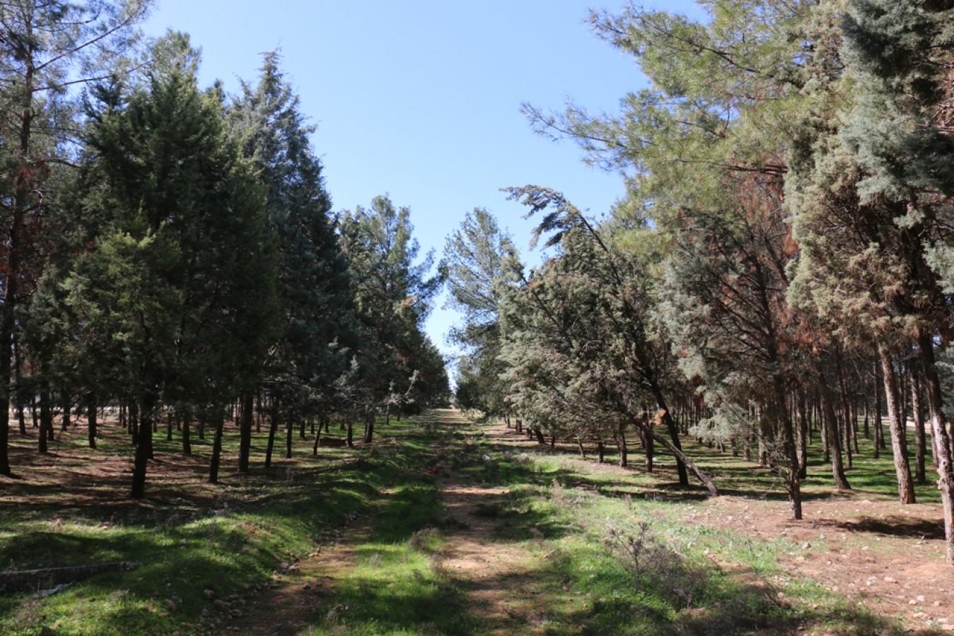 Akçakale'de Merkez Mesire Alanı Projesi