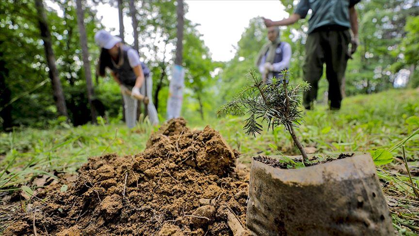 Özel Ağaçlandırma Projesi