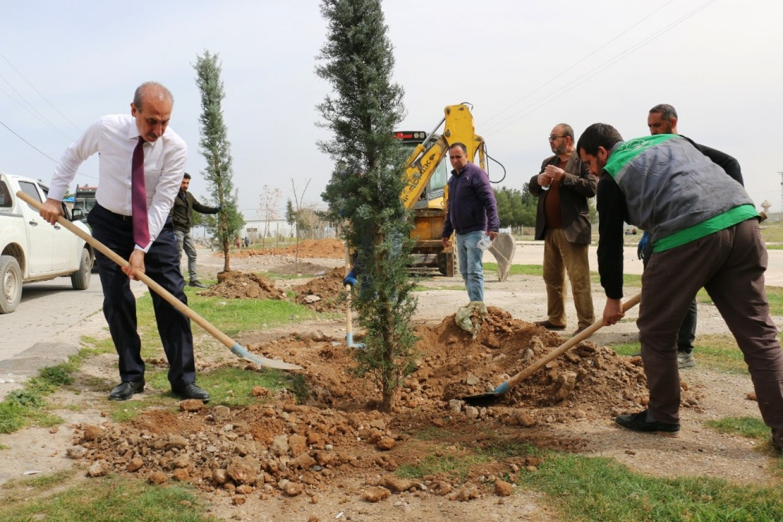 Ağaçlandırma Projesi